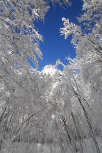 冬の美人林