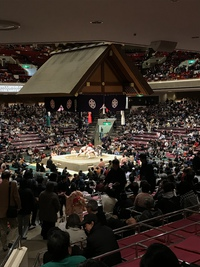大相撲初場所観戦