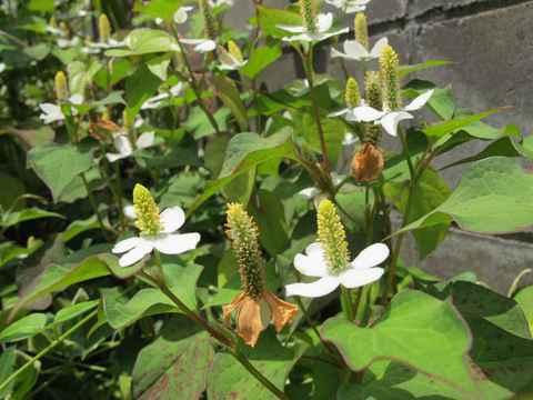 我が家の花