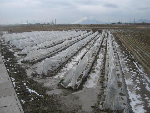 新潟冬景色-1