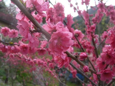 炒飯with麻婆豆腐