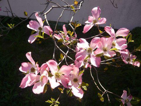 花の街 新潟