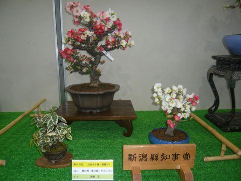 第40回日本木瓜展(にほんボケてん)