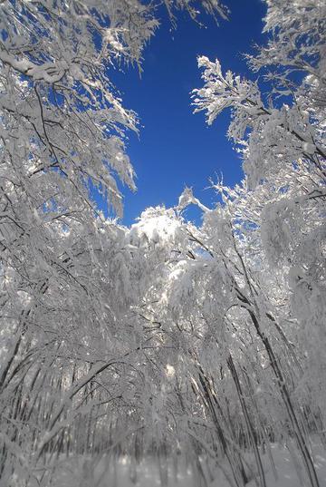 雪のシャワ―