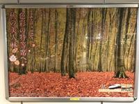 東京駅の美人林(びじんばやし)