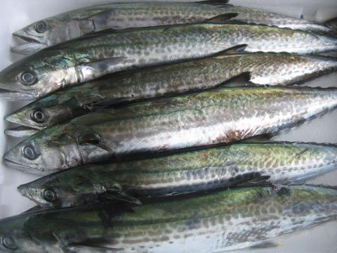 市場にあがった魚