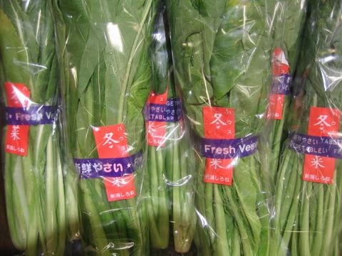 新潟の冬野菜「冬菜」です。