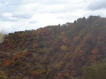 松之山全山紅葉