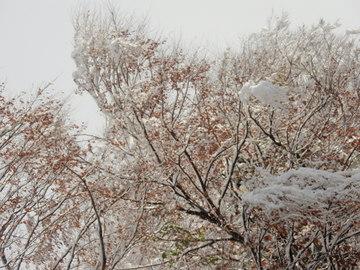 松之山全山初雪