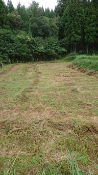 牧草地残草刈り