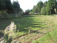 牧草の芽生え等