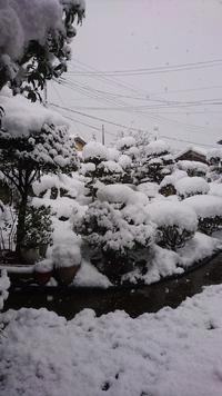 本降りの雪