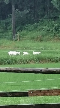 雨降る中の草刈