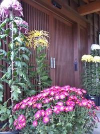 玄関前の菊 2017