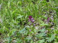 春の山野草 1