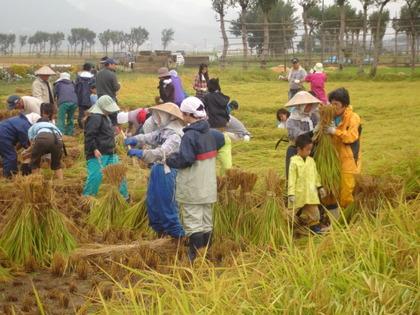 収穫祭2009  (稲刈り&はざかけ体験)