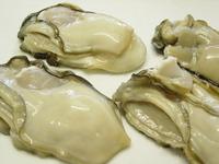 岩牡蠣の酢物