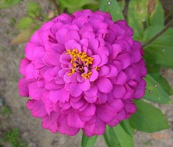 盛夏の花いっぱい