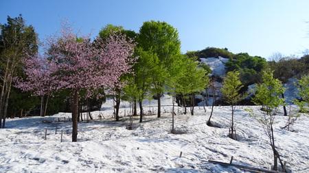 桜と新緑と残雪