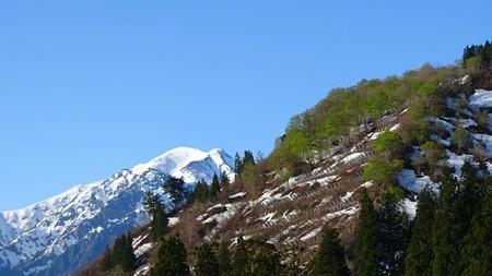 新緑と越後駒ヶ岳
