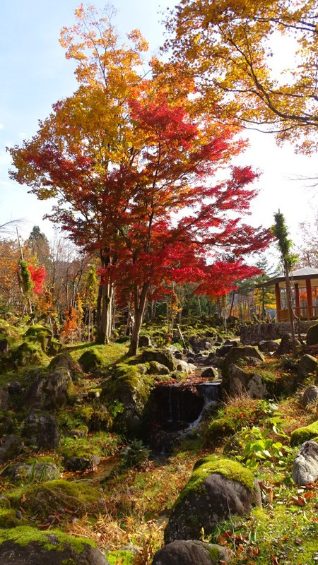 大湯公園の紅葉