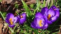 春らしい天気