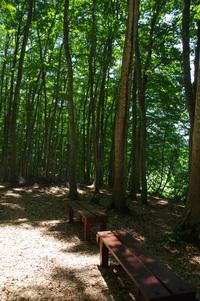 6月10日の美人林