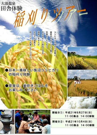 日曜日は、稲刈り体験