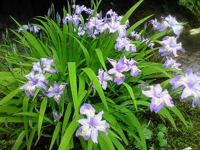 中庭の花たち