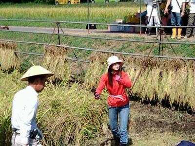 桃米の稲刈り