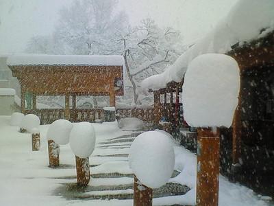 大湯温泉スキー場 本日オープン!