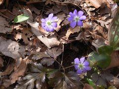 花シーズン突入です!