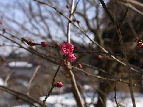 春の足音は着実に…