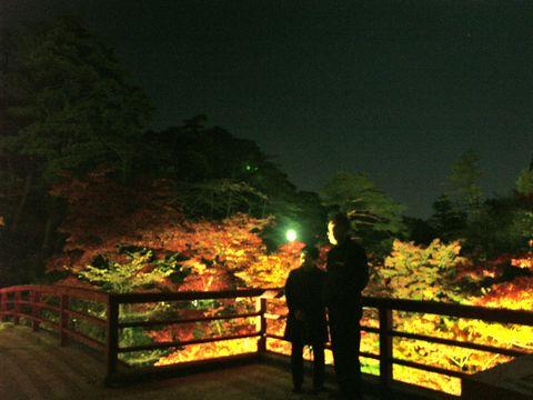 弥彦公園もみじ谷ライトアップ
