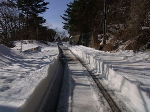 2011年、初の雪割草