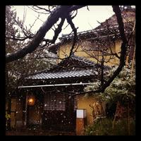 雪が降ってきたぞぉ〜。