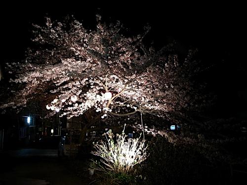 岩室夜桜〜その壱〜