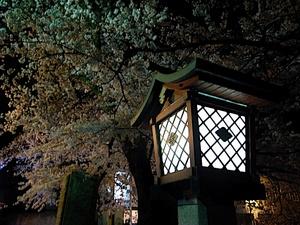 岩室夜桜〜其の弐〜