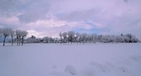 大雪大変。でもきれい。