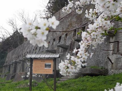 春真っ盛り