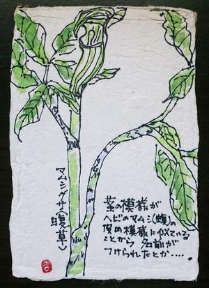 山の春の草花