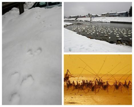冬の動物 animals found in Winter