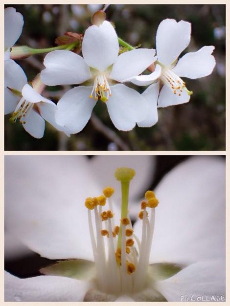 裏山の早春