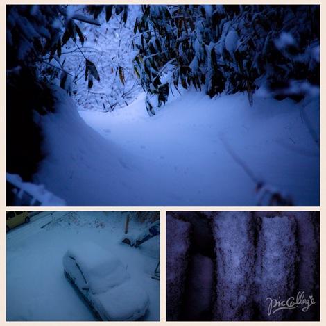雪の朝  snowy morning