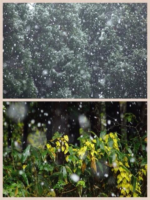 積雪 fallen snow