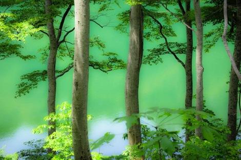 雨生池グリーン