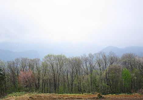 春の雑木林