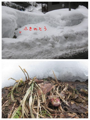 雪の下には春が