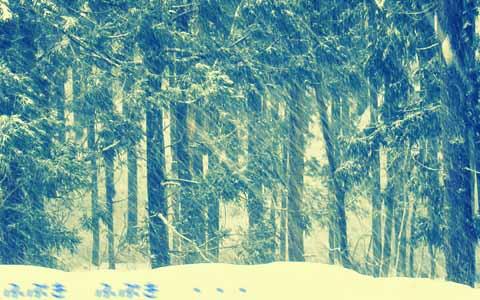 今日から吹雪です。