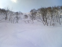 湯沢高原にて、にほんカモシカ